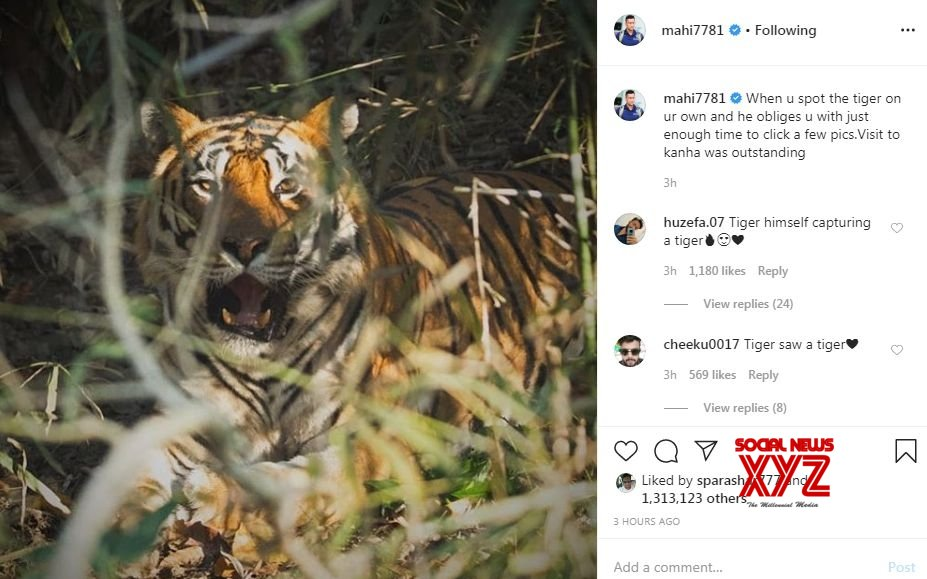 Dhoni takes to Instagram to post photo of tiger