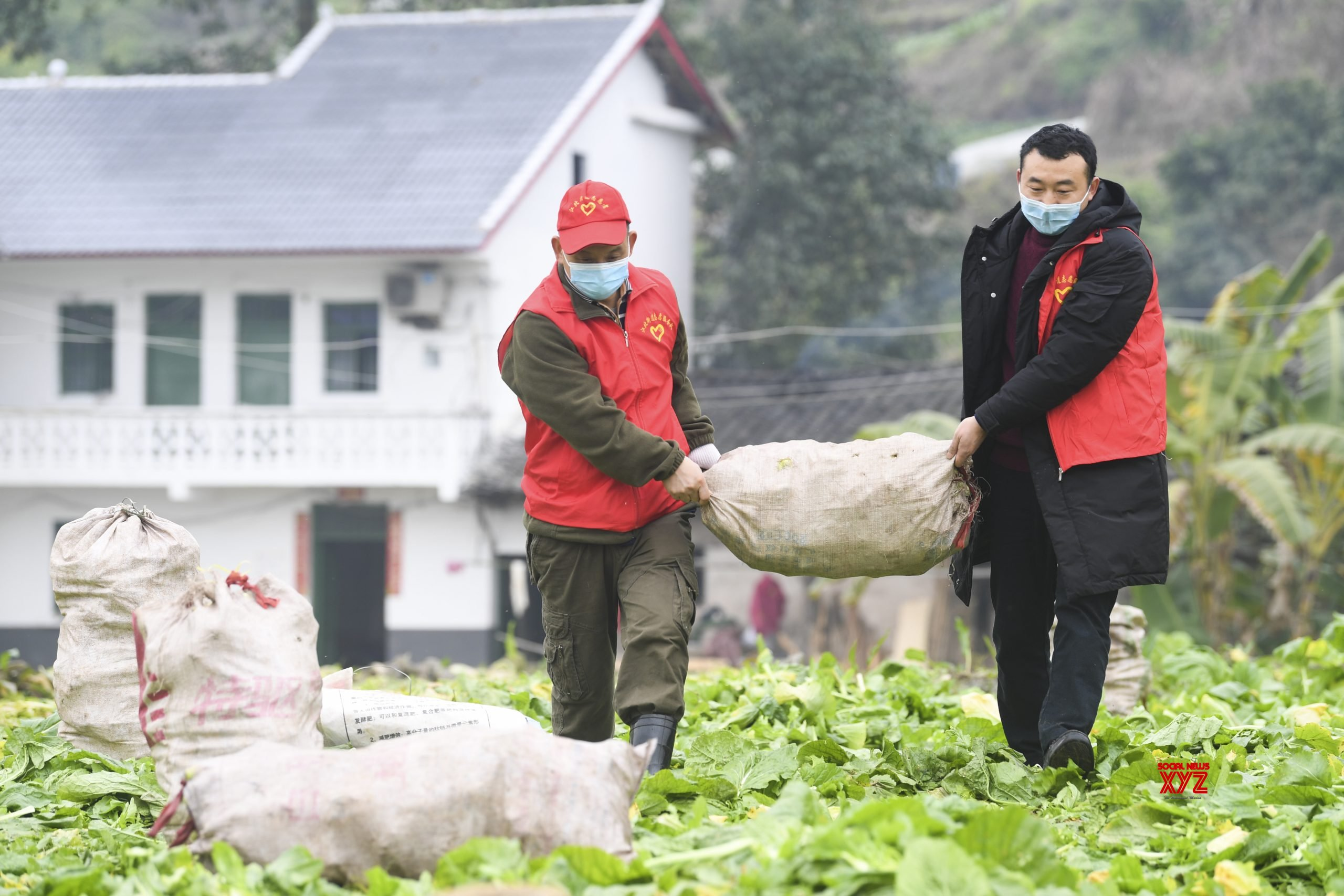 CHINA - CHONGQING - NCP - VOLUNTEER SERVICE - HARVEST #Gallery