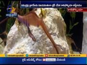California Aquarium Successfully Hatches Rare Sea Dragons  (Video)