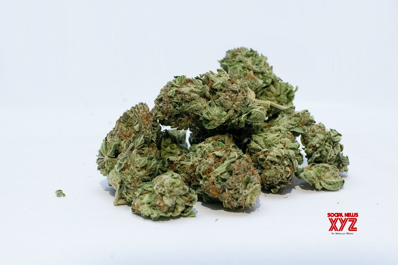 Legal marijuana products too strong for pain relief: Study
