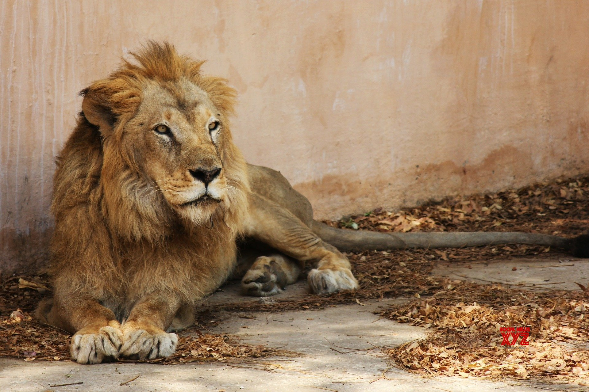 Teenager killed in attack of four lions in Lahore's Safari Park