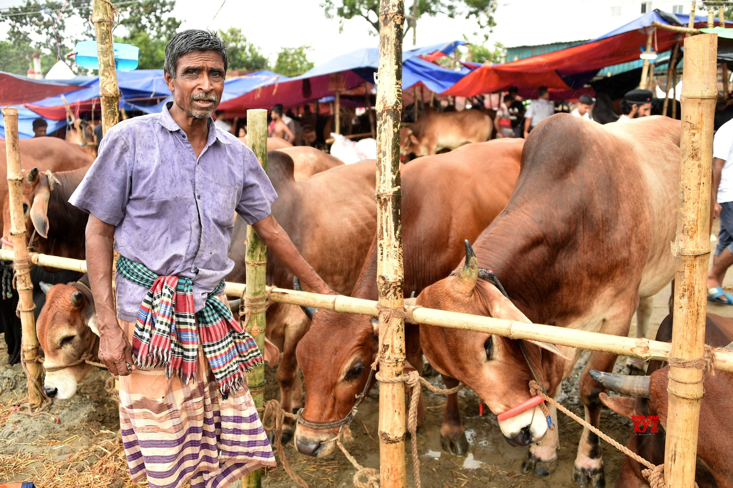 Ensure movement of animal fodder, Home Ministry tells states