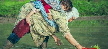 Paddy cultivation in full swing in Kashmir amid corona fear.