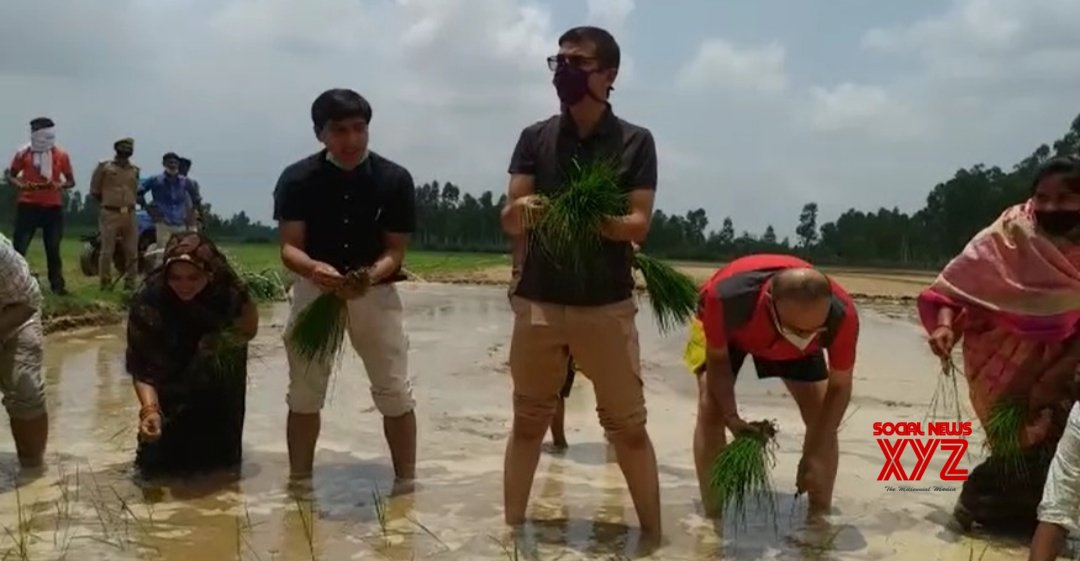 Barabanki: DM - SP step into the feild for transplantation of paddy in UP #Gallery