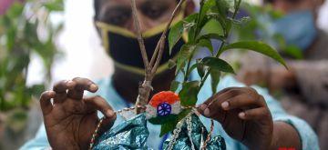 Kolkata : A specially-abled person ties rakhi to a plant on the eve of Raksha Bandhan in Kolkata on Aug 2, 2020. (Photo: IANS)
