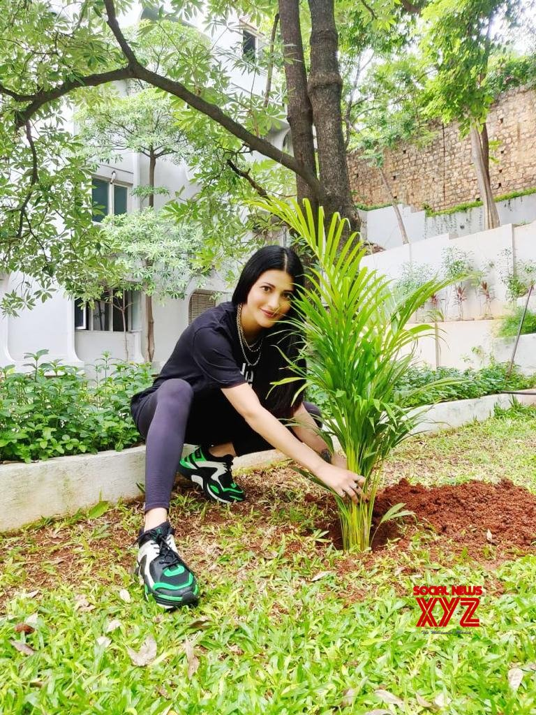 Shruthi Haasan Accepted Green India Challenge From Mahesh Babu And DSP And Planted Saplings At Her Home