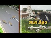 TTD step up security, install CCTV cameras At tirumala  (Video)