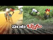 NTV: Farmers Face Huge Loss After Heavy Rains Damage Crops in Telangana (Video)