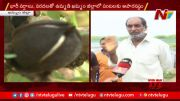 NTV: Heavy Rain Fall Destroys Farmer's Crop In Khammam (Video)