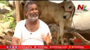 NTV:  Special Focus On Free Milk (Video)