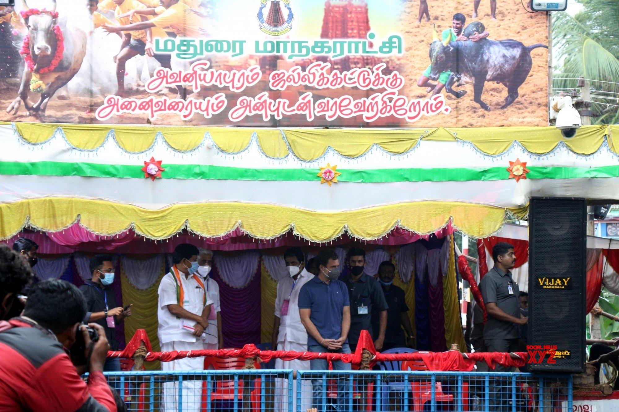 Chennai: - Tamil Nadu's traditional bull taming festival, Jallikattu in AvaniyaPuram #Gallery