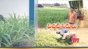 Success Story of Farmer Srinivas | from Rangamept | Gets Income from Selling of Green Grass & Silage  (Video)