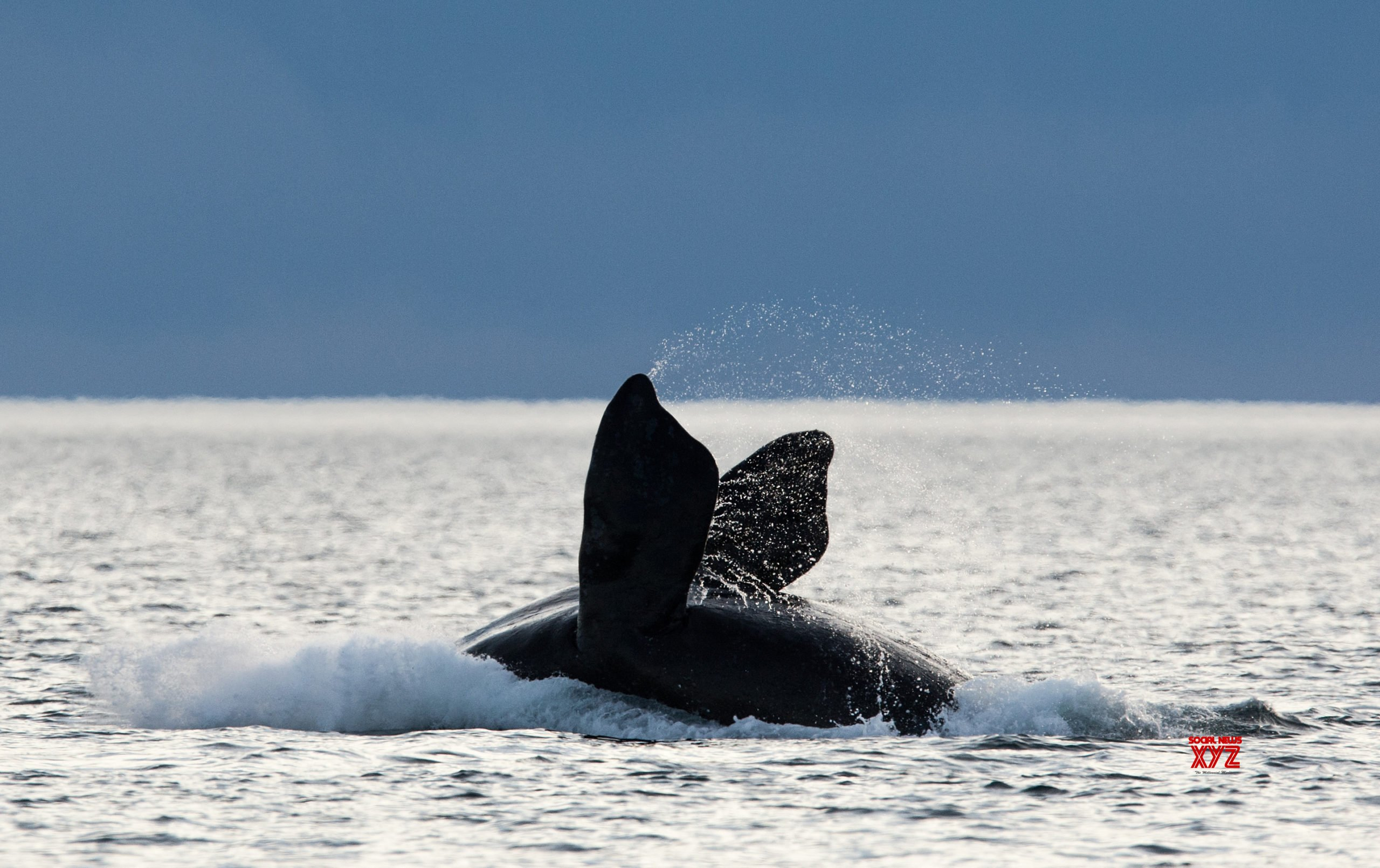Amid slowdown, scientists assess changes in marine life behaviour