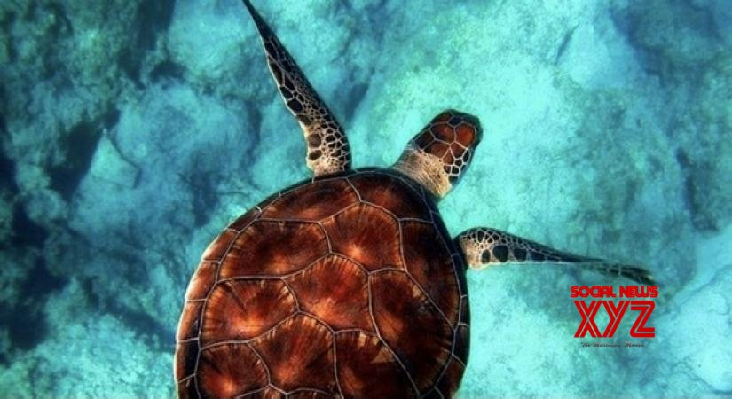 Conservation of sea turtles is a must for a balanced ocean ecosystem: Bhau Katdare