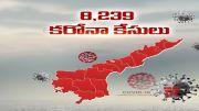 COVID -19   Andhra Pradesh Logs 8,239 New Corona Cases, 61 Deaths  (Video)