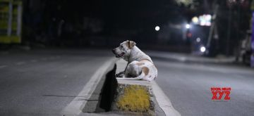 Patna: A stray dog relaxes on the divider of a deserted Patna street during the extended nationwide lockdown imposed to mitigate the spread of coronavirus; on Apr 18, 2020. (Photo: IANS)
