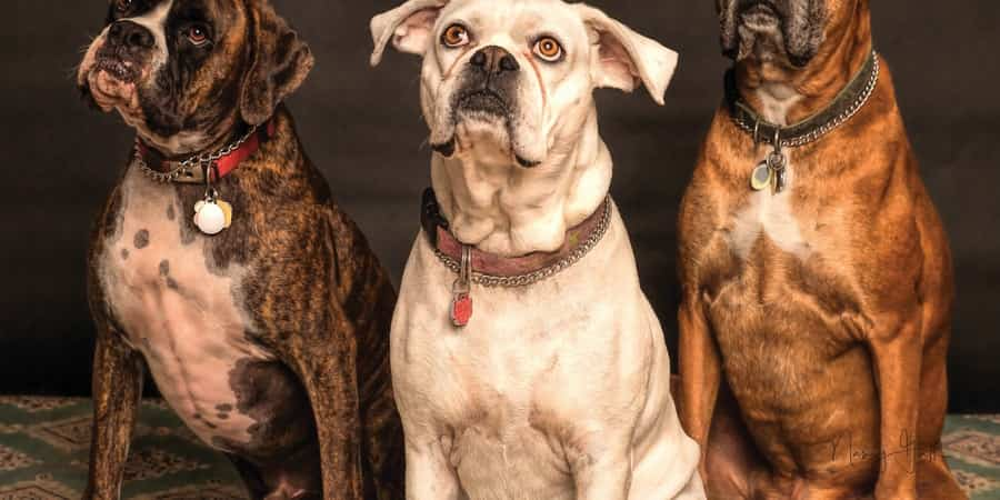 5 Tips For Managing Behavioural Issues In Dogs
