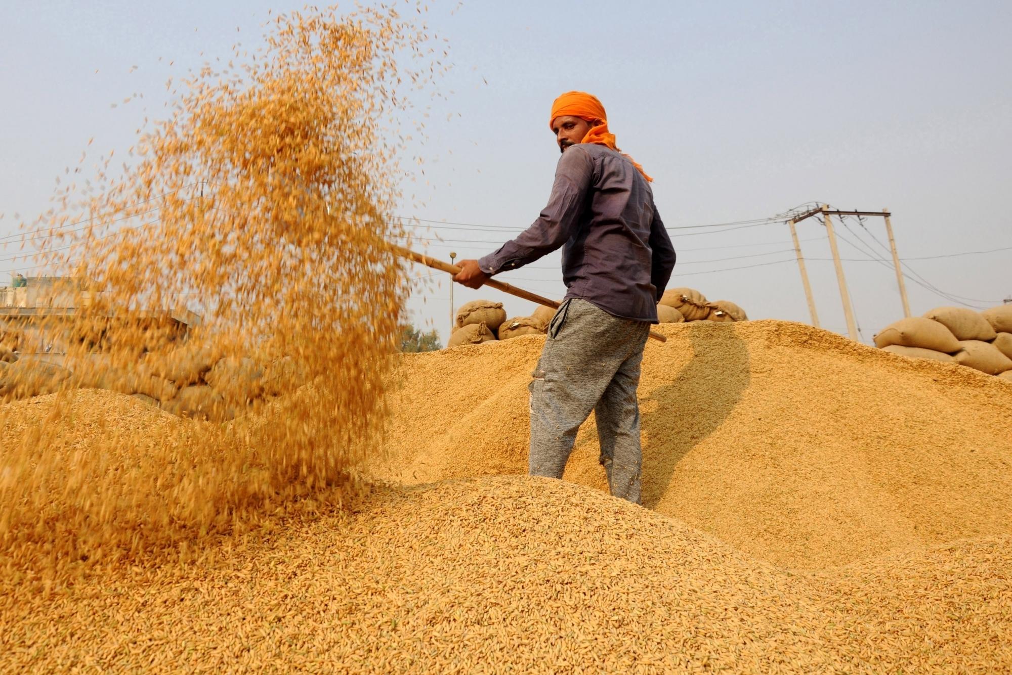 Punjab okays paddy procurement arrangements - Social News XYZ