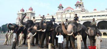 Bengaluru: Mahouts bathing the Dasara Elephants for the upcoming Dasara 2021 Festival in Mysuru on Sunday, September 19, 2021. (Photo: Dhananjay yadav/IANS)