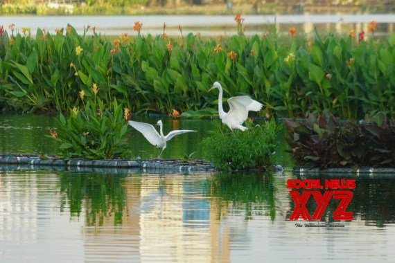 Colombo : 'Ecological floating islands' in Colombo's Beira Lake #Gallery