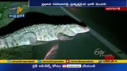 Crocodile Found on Road @ Karnataka |       (Video)