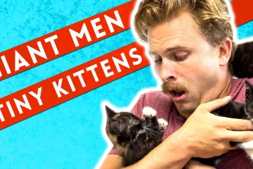 Giant-Men-Meet-Tiny-Kittens