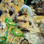 Seahorse at Jellyfish Restaurant