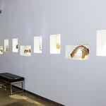 Zicana Showroom