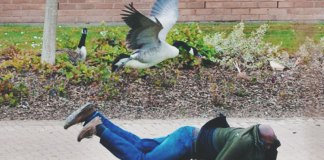 Between the god awful financial services or stepping in goose poop before class, here's GIFs that describe what it's like to be a student at Waterloo.