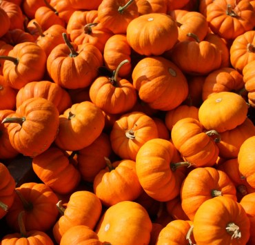 Finding a pumpkin farm in the UK is a must for the fall season so you can pick out the perfect pumpkins to carve and decorate!