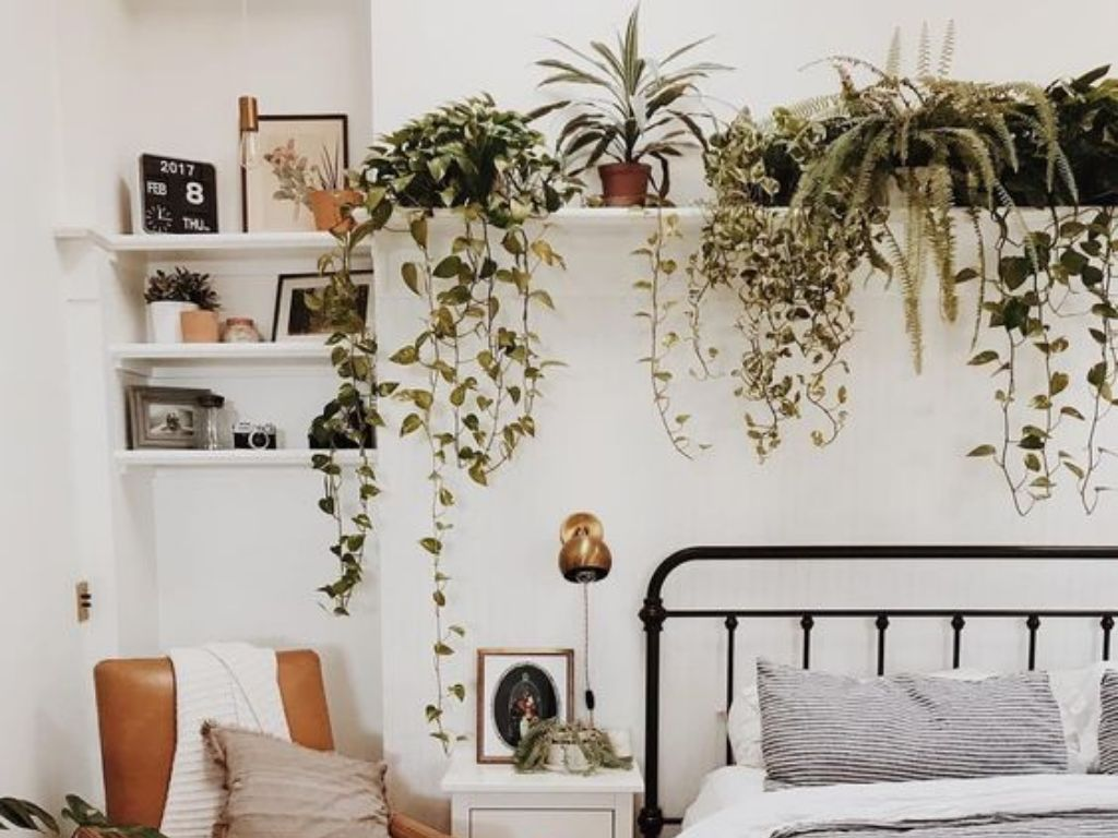 Did you know that plants can help you decor?Here are some beautiful low maintenance plants that are perfect for making any university bedroom feel inviting.