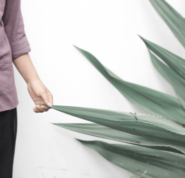 Although you may have heard a lot about aloe vera in recent years, you may not be fully clued up on its uses. Read to find out more!
