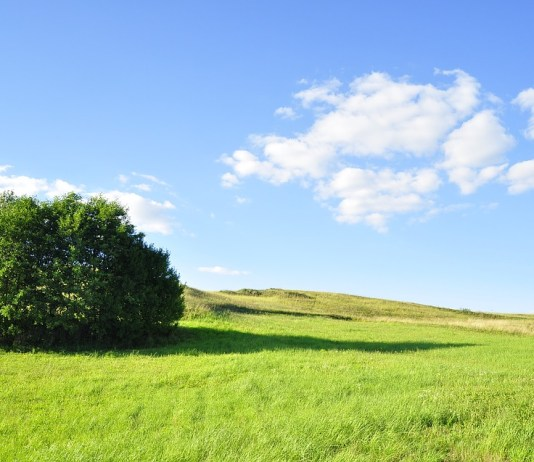 5 Ways To Help The Environment More