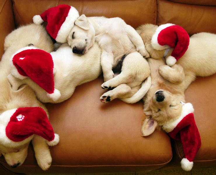 Let's face it: dogs are always adorable, no matter the time of year. But here are 15 times dogs were too cute for words: holiday edition!