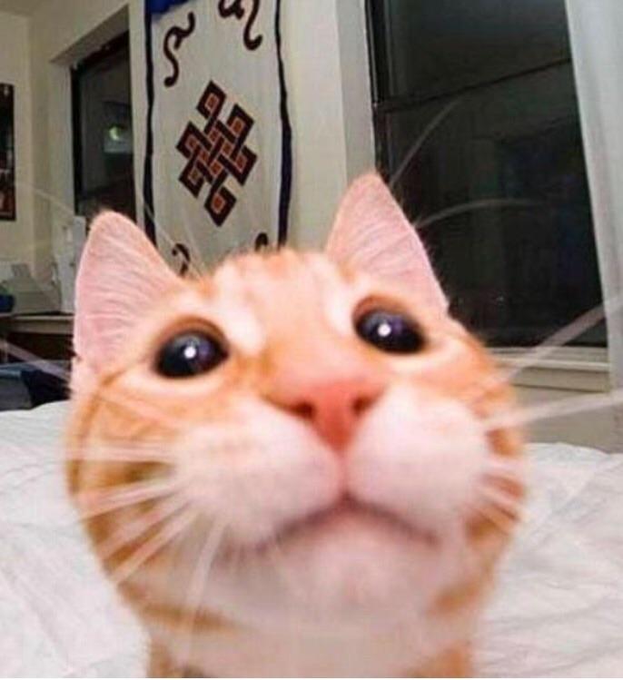 cute kitten selfie