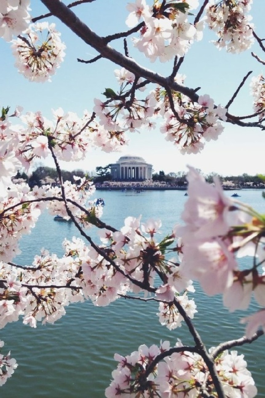 cool D.C. pic