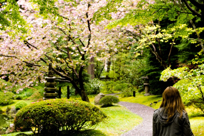 beautiful Nitobe gardens at UBC