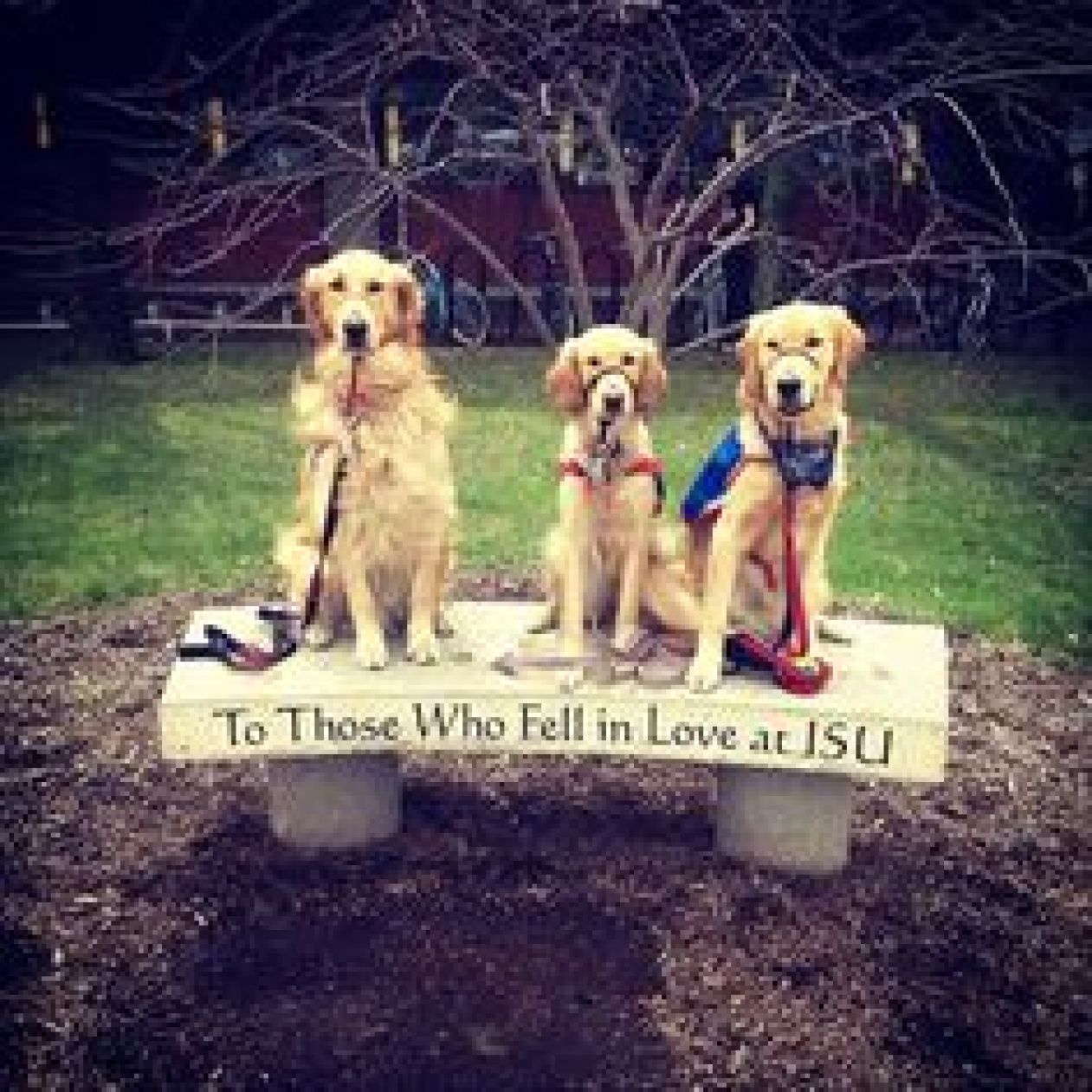 adorable pups on the Illinois State bench