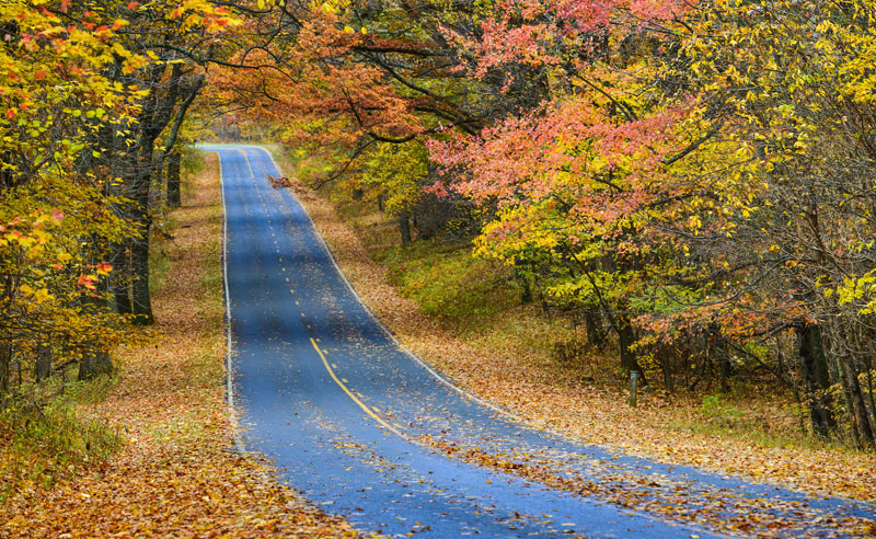 From apple picking to camping, there are plenty of things to do in New York. Keep reading for 10 fall road trips to take in New York!