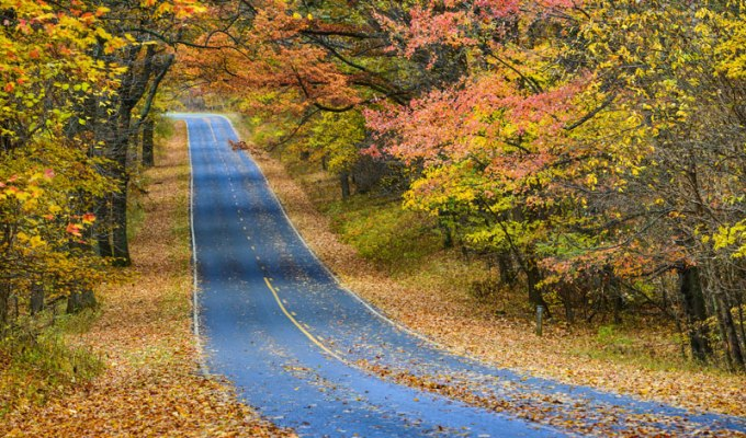 Check out some awesome places to visit that make forthe perfect fall road trips in Indiana. From sightseeing to museums, you're sure to have a great fall!