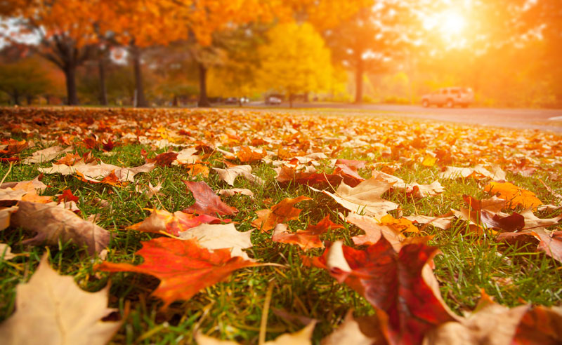 Pumpkin spiced lattes, our bonfires, and our over sized sweaters. It's a beautiful, beautiful time. Fall!Keep reading for10 reasons to love fall at UF!