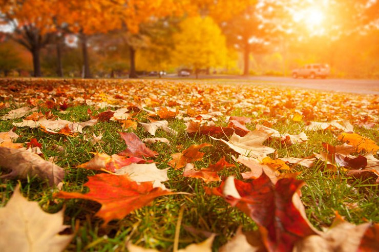 Luckily for us students in Maryland, there areplenty of fun things to during fall. Keep reading for 10 reasons to love fall at UMD!