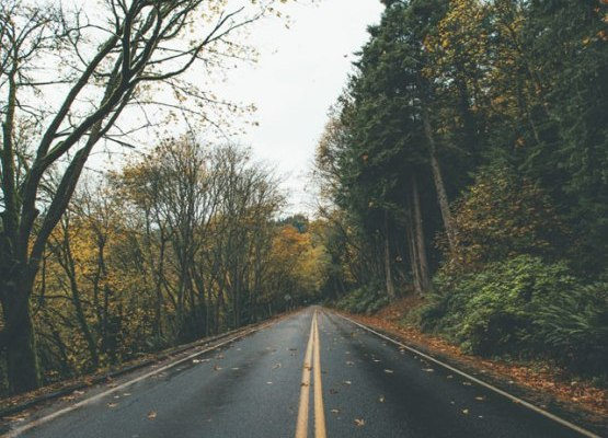 If you want to take a road trip in this fall and live near campus, check out these 10 fun fall road trips in Illinois to take with your friends!