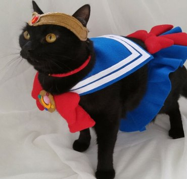 15 Cats In Halloween Costumes That Will Make Your Day