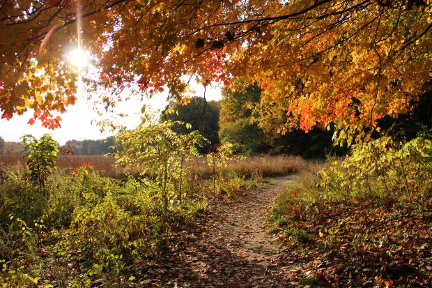 The arboretum is one of the best cheap and fun date ideas near the University of Michigan!