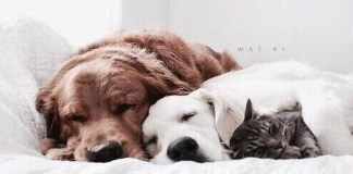Having a pet in college is the best. Here is why having a pet in college is fun but a lot of responsibility. Here's what you need to know if you want a pet.
