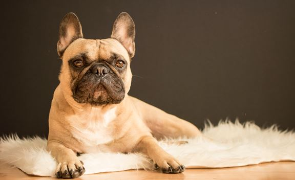 What dog to get based on your zodiac sign!