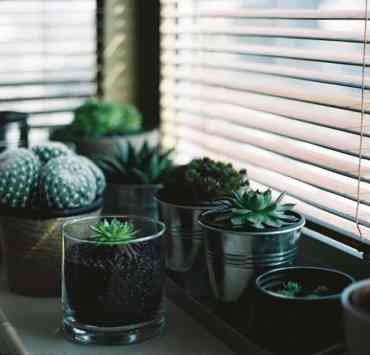 10 Indoor House Plants Perfect For Summer Time
