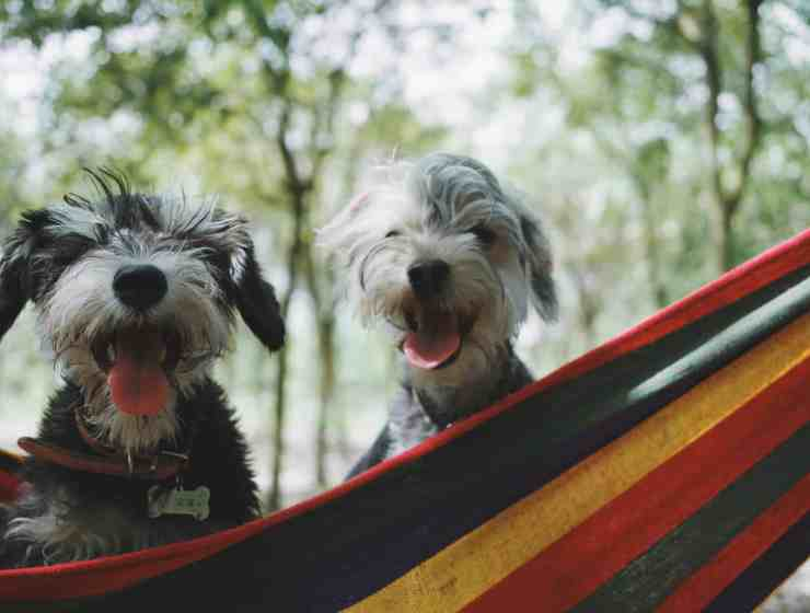 There's nothing better than finding a cute dog at the University of Florida. Here's our guide for the best places to spot dogs!