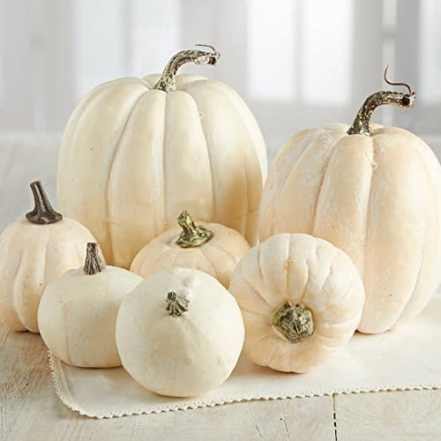 Check out this modern fall decor for your space!